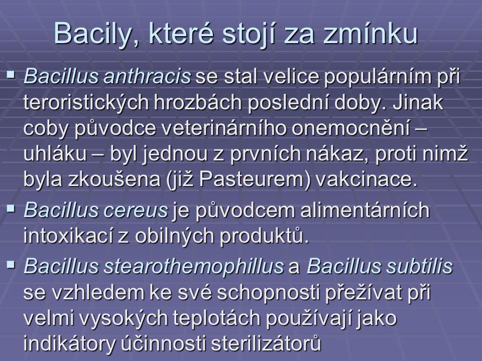 Bacily, které stojí za zmínku  Bacillus anthracis se stal velice populárním při teroristických hrozbách poslední doby. Jinak coby původce veterinární
