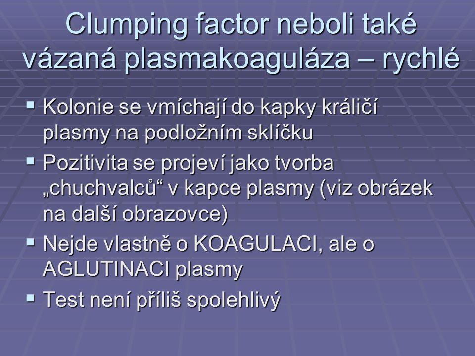 """Clumping factor neboli také vázaná plasmakoaguláza – rychlé  Kolonie se vmíchají do kapky králičí plasmy na podložním sklíčku  Pozitivita se projeví jako tvorba """"chuchvalců v kapce plasmy (viz obrázek na další obrazovce)  Nejde vlastně o KOAGULACI, ale o AGLUTINACI plasmy  Test není příliš spolehlivý"""