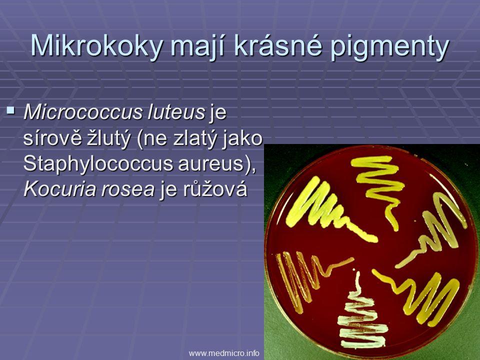 Mikrokoky mají krásné pigmenty  Micrococcus luteus je sírově žlutý (ne zlatý jako Staphylococcus aureus), Kocuria rosea je růžová www.medmicro.info
