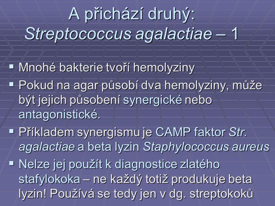 A přichází druhý: Streptococcus agalactiae – 1  Mnohé bakterie tvoří hemolyziny  Pokud na agar působí dva hemolyziny, může být jejich působení syner