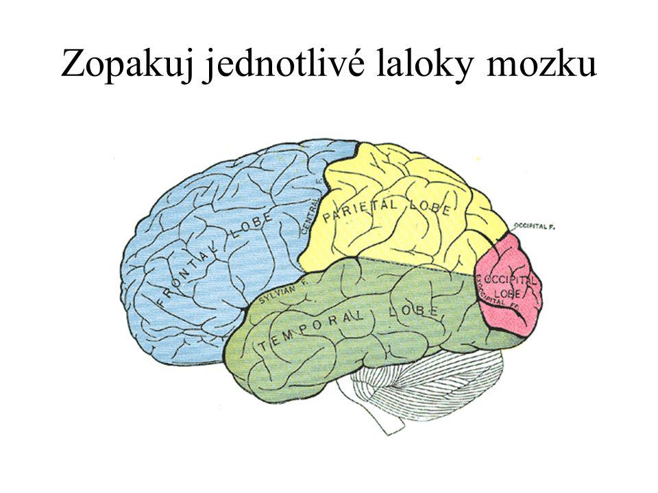 Zopakuj jednotlivé laloky mozku