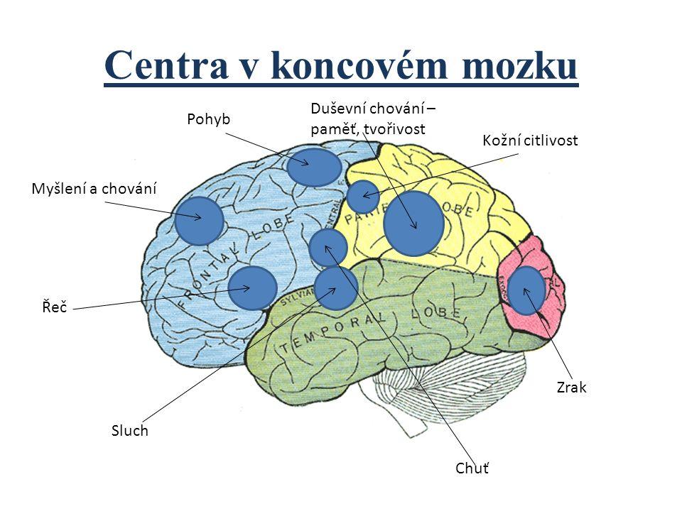 Centra v koncovém mozku Myšlení a chování Řeč Pohyb Duševní chování – paměť, tvořivost Kožní citlivost Sluch Chuť Zrak