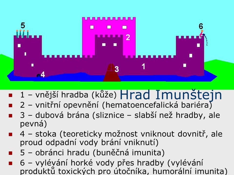1 – vnější hradba (kůže) 2 – vnitřní opevnění (hematoencefalická bariéra) 3 – dubová brána (sliznice – slabší než hradby, ale pevná) 4 – stoka (teoreticky možnost vniknout dovnitř, ale proud odpadní vody brání vniknutí) 5 – obránci hradu (buněčná imunita) 6 – vylévání horké vody přes hradby (vylévání produktů toxických pro útočníka, humorální imunita) Hrad Imunštejn