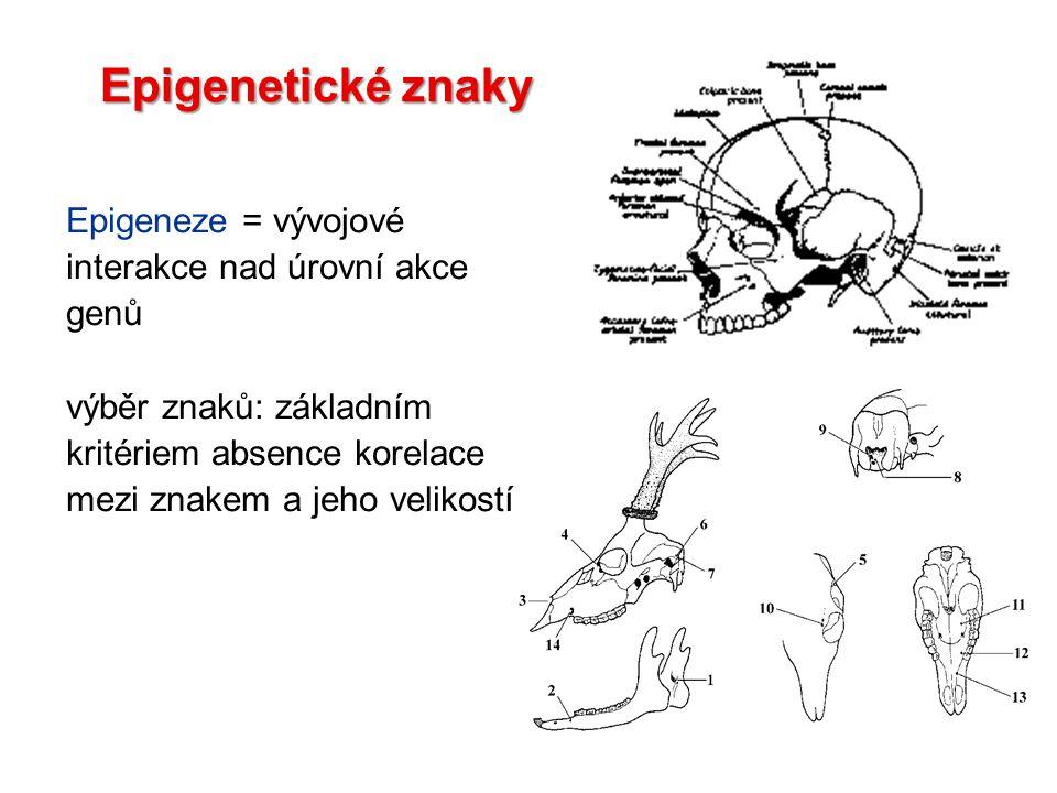 Epigenetické znaky Epigeneze = vývojové interakce nad úrovní akce genů výběr znaků: základním kritériem absence korelace mezi znakem a jeho velikostí
