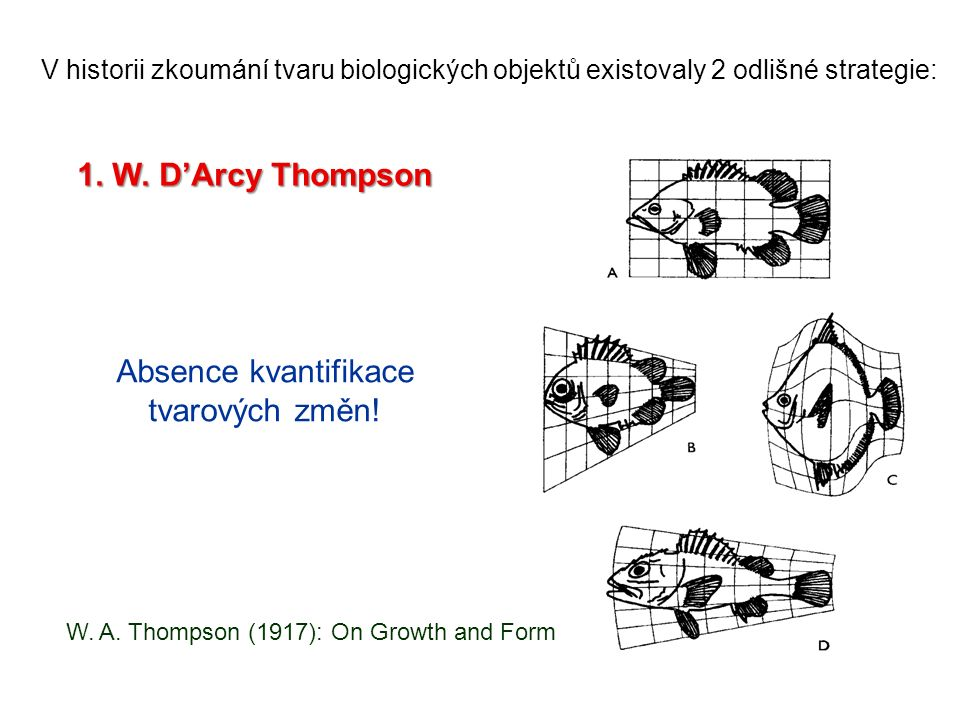 W. A. Thompson (1917): On Growth and Form Absence kvantifikace tvarových změn.