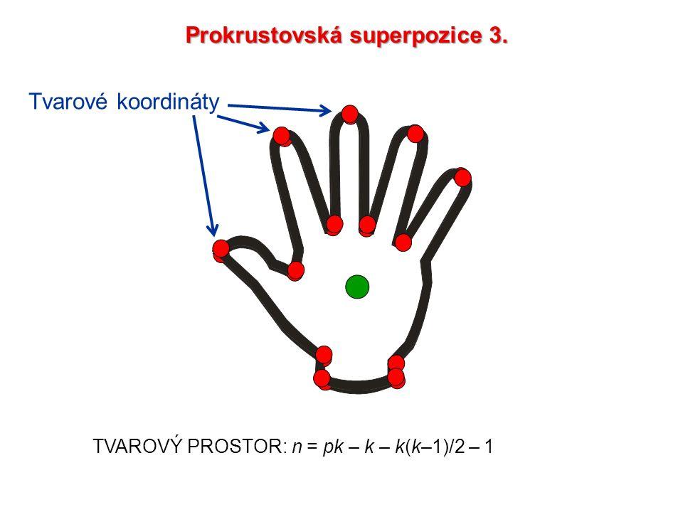 TVAROVÝ PROSTOR: n = pk – k – k(k–1)/2 – 1 Prokrustovská superpozice 3. Tvarové koordináty
