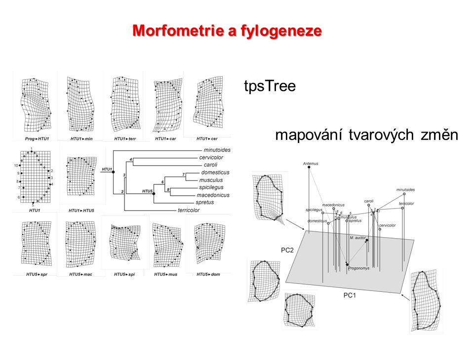 Morfometrie a fylogeneze tpsTree mapování tvarových změn