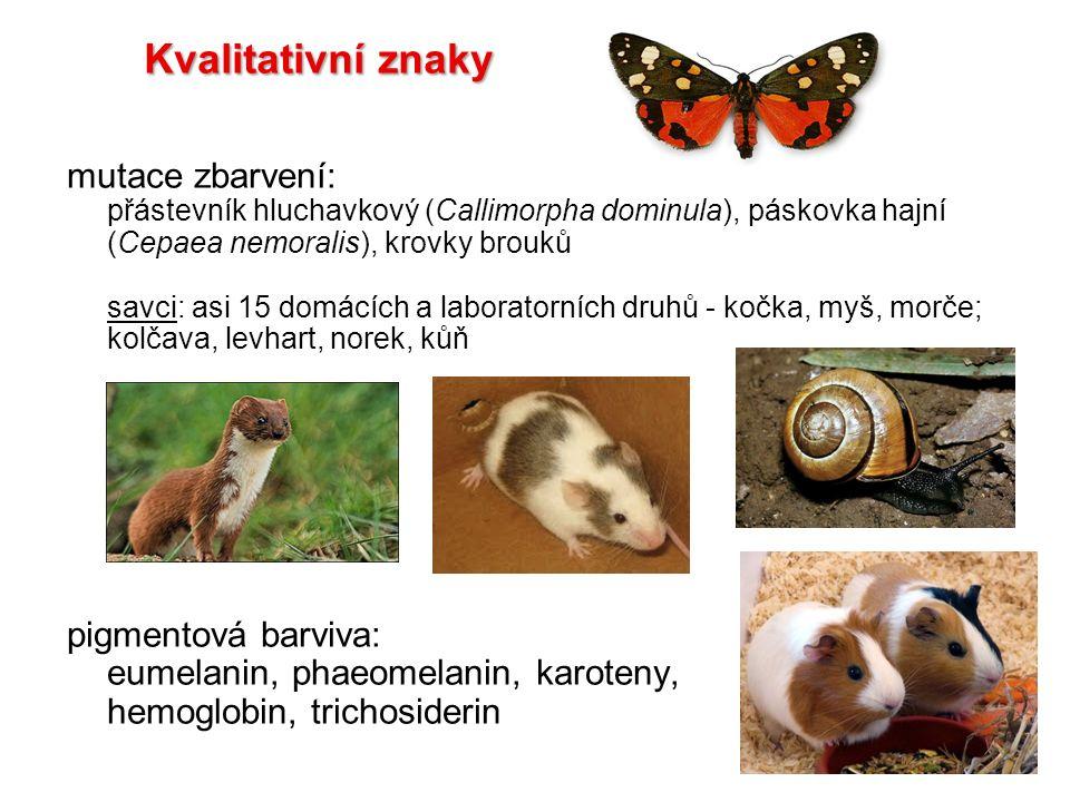 Prokrustovská superpozice 2.