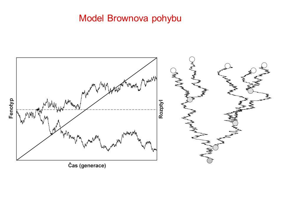 Model Brownova pohybu