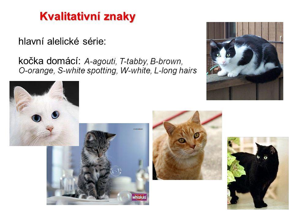 Kvalitativní znaky hlavní alelické série: kočka domácí: A-agouti, T-tabby, B-brown, O-orange, S-white spotting, W-white, L-long hairs