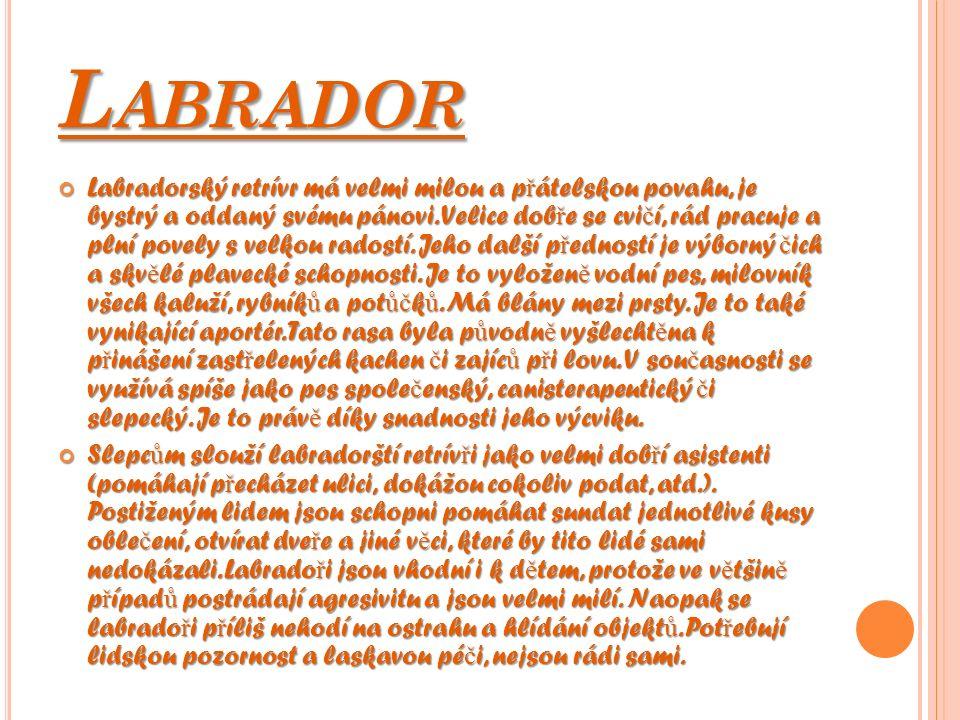 L ABRADOR Labradorský retrívr má velmi milou a p ř átelskou povahu, je bystrý a oddaný svému pánovi. Velice dob ř e se cvi č í, rád pracuje a plní pov