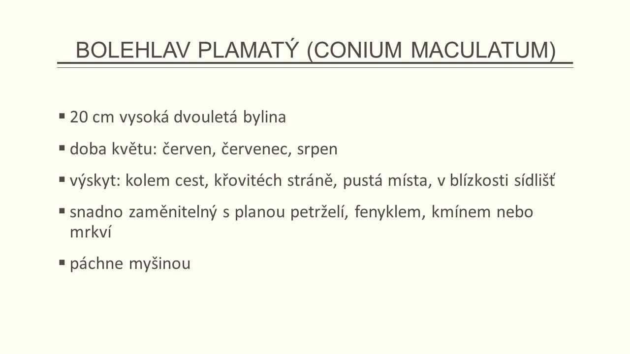 BOLEHLAV PLAMATÝ (CONIUM MACULATUM)  20 cm vysoká dvouletá bylina  doba květu: červen, červenec, srpen  výskyt: kolem cest, křovitéch stráně, pustá místa, v blízkosti sídlišť  snadno zaměnitelný s planou petrželí, fenyklem, kmínem nebo mrkví  páchne myšinou