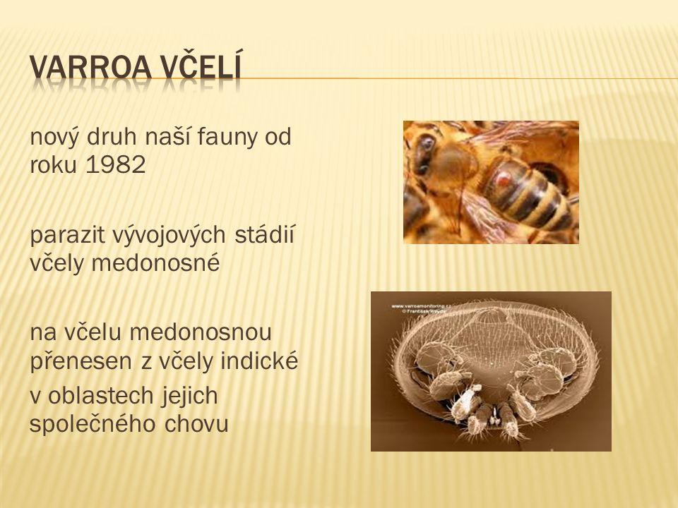 nový druh naší fauny od roku 1982 parazit vývojových stádií včely medonosné na včelu medonosnou přenesen z včely indické v oblastech jejich společného chovu