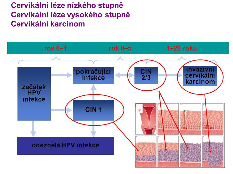 rok 0–1rok 0–51–20 roků invazivní cervikální karcinom odeznělá HPV infekce CIN 1 začátek HPV infekce pokračující infekce CIN 2/3 Cervikální léze nízkého stupně Cervikální léze vysokého stupně Cervikální karcinom