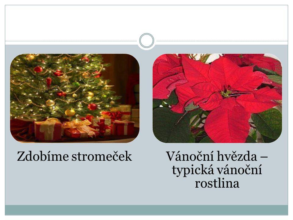 Zdobíme stromečekVánoční hvězda – typická vánoční rostlina