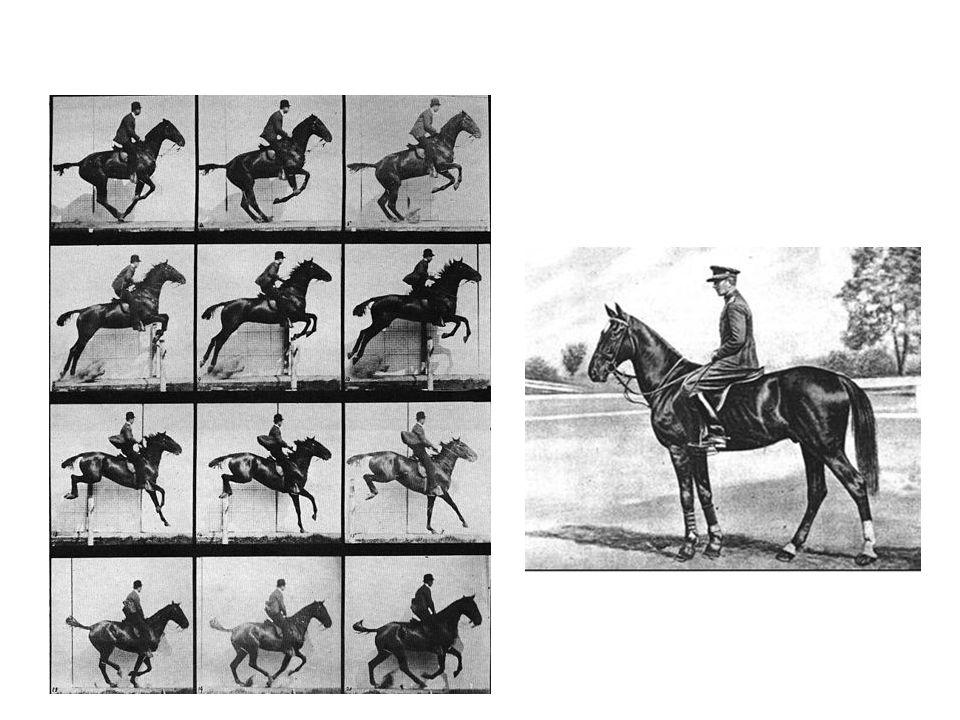 cílem je prověření dvojice – koně a jezdce - na dráze s překážkami – mají prokázat klid, uvolněnost, sílu a dovednost koně při skákání a jezdecké schopnosti jezdce v ítězem je jezdec s nejmenším počtem trestných bodů a nejrychlejším časem v rozeskakování