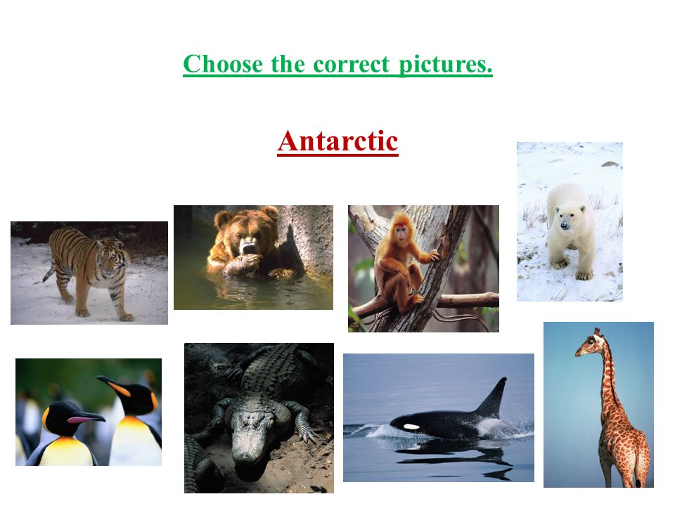 Choose the correct pictures. Antarctic