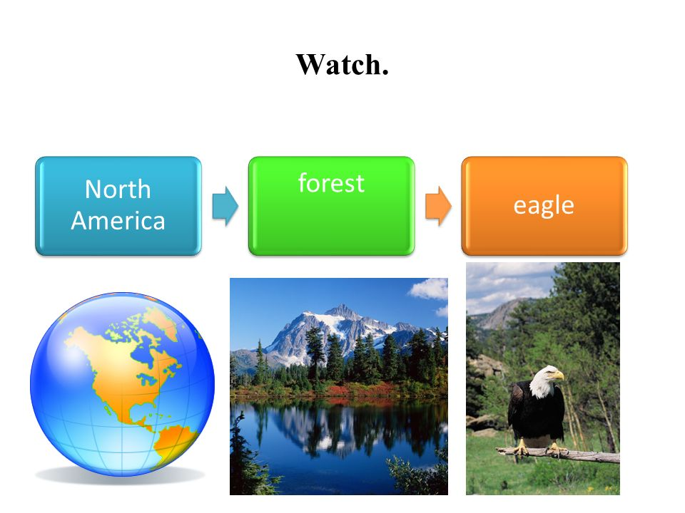 Watch. North America forest eagle