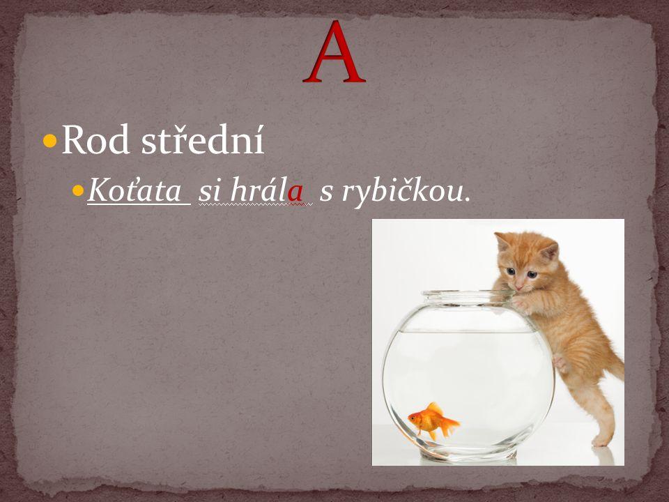 Rod střední Koťata si hrála s rybičkou.