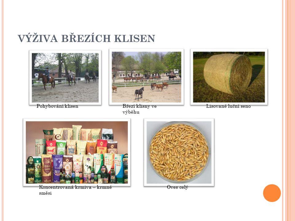 VÝŽIVA BŘEZÍCH KLISEN Pohybování klisenBřezí klisny ve výběhu Koncentrovaná krmiva – krmné směsi Oves celý Lisované luční seno