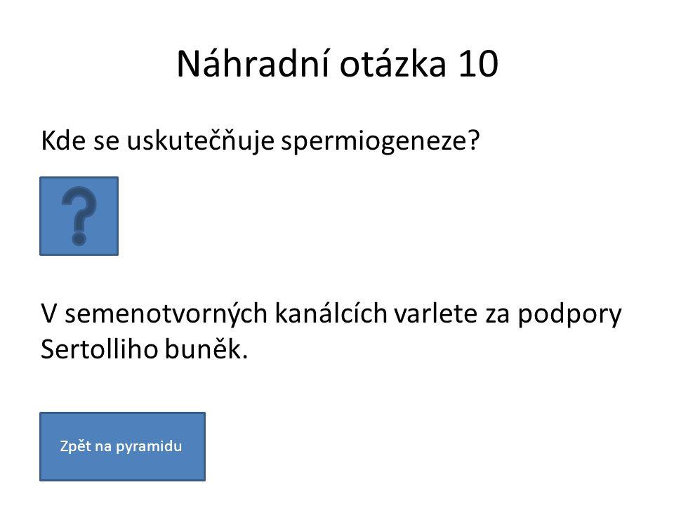 Náhradní otázka 10 Kde se uskutečňuje spermiogeneze.