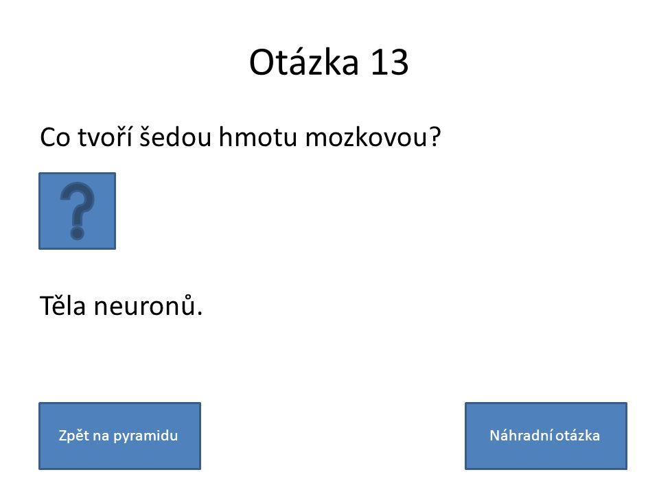 Otázka 13 Co tvoří šedou hmotu mozkovou Těla neuronů. Zpět na pyramiduNáhradní otázka