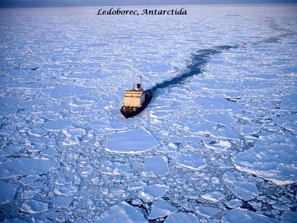 Ledoborec, Antarctida