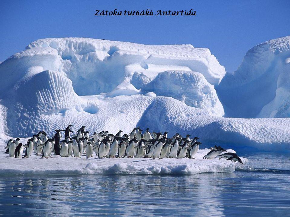 Zátoka tu čň ák ů Antartida