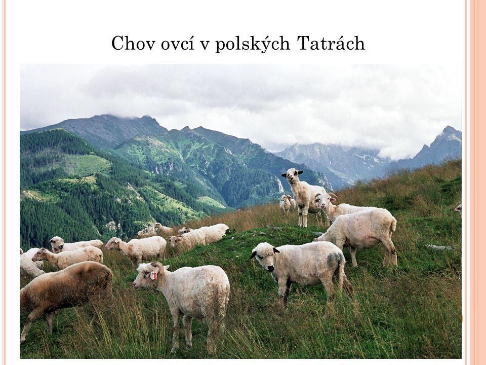 ŠVÝCARSKO (KONFEDERACE) hlavní město: Bern měna: Švýcarský frank Hlavní město Bern je světovým sídlem bankovnictví Povrch je hornatý - velehory švýcarské Alpy Zemědělství - velmi vyspělé pastevectví na vysokohorských loukách průmysl hlavně strojírenství výroba kvalitních hodinek léčiv a potravin- hlavně sýry a čokolády
