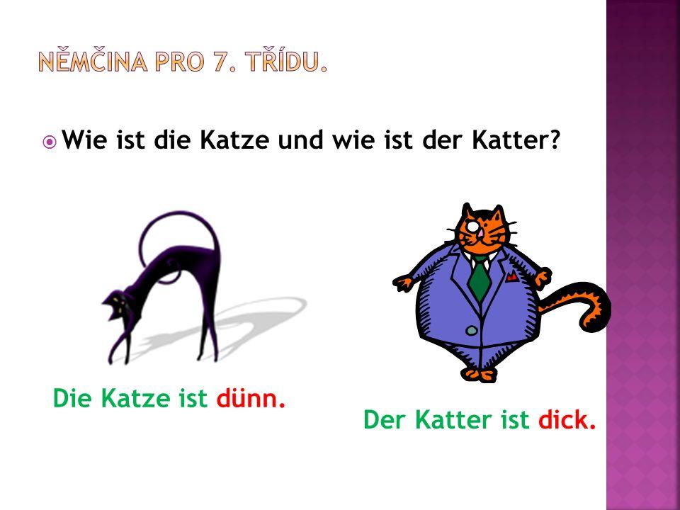  Wie ist die Katze und wie ist der Katter Die Katze ist dünn. Der Katter ist dick.