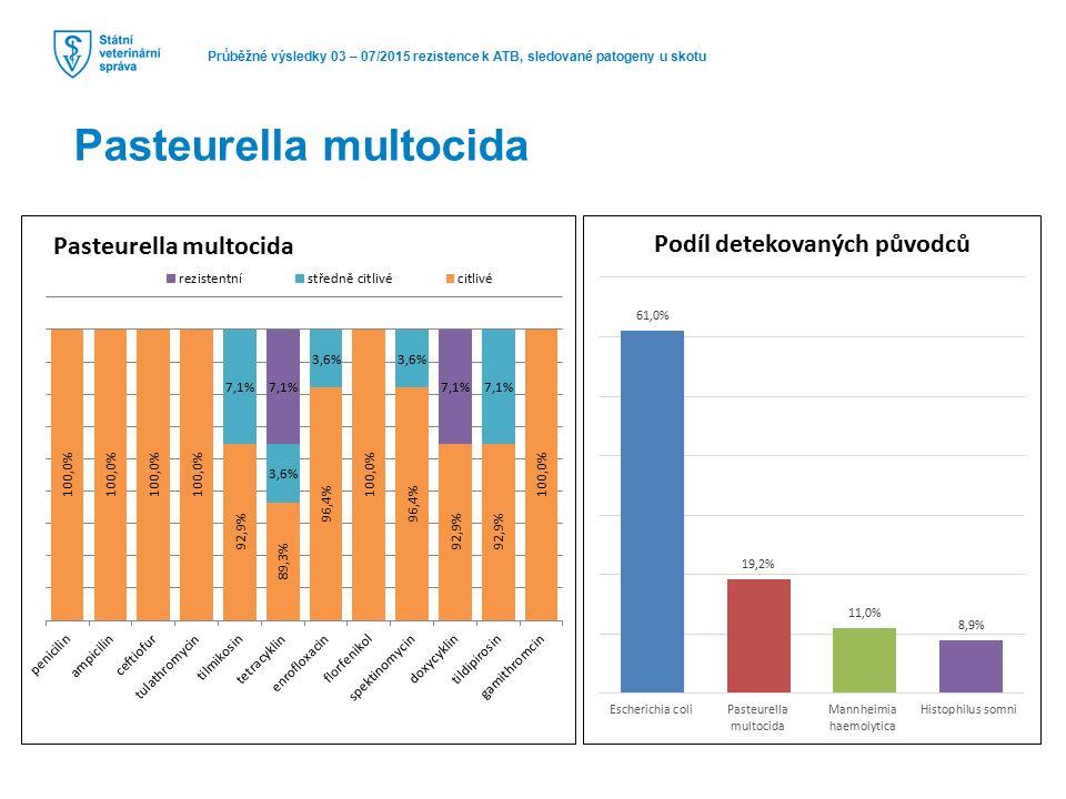 Průběžné výsledky 03 – 07/2015 rezistence k ATB, sledované patogeny u skotu Pasteurella multocida