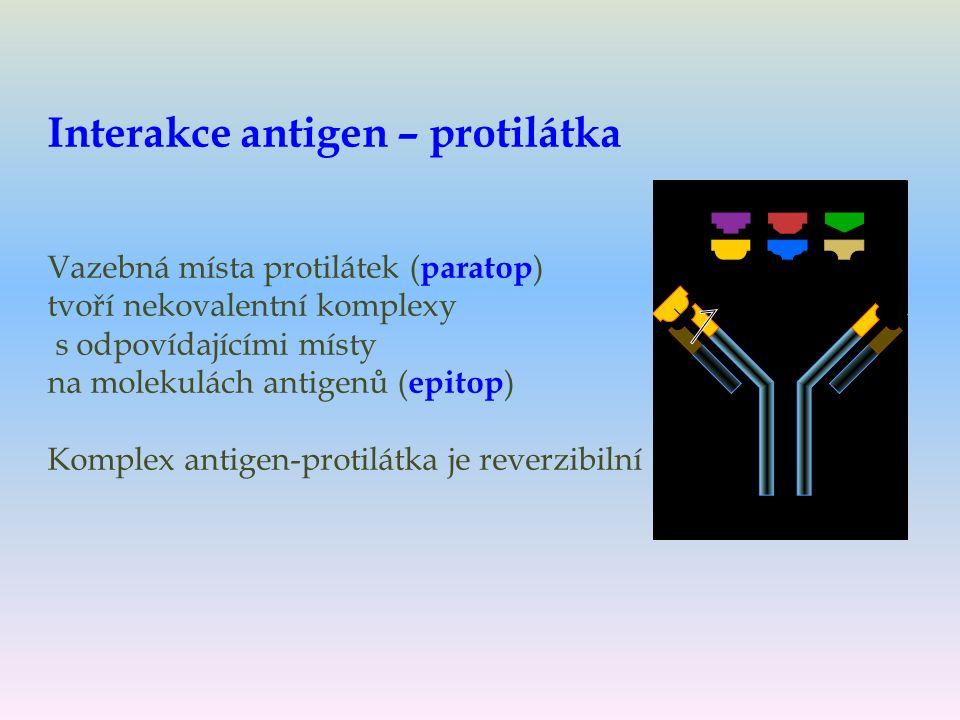 Interakce antigen – protilátka Vazebná místa protilátek ( paratop ) tvoří nekovalentní komplexy s odpovídajícími místy na molekulách antigenů ( epitop ) Komplex antigen-protilátka je reverzibilní