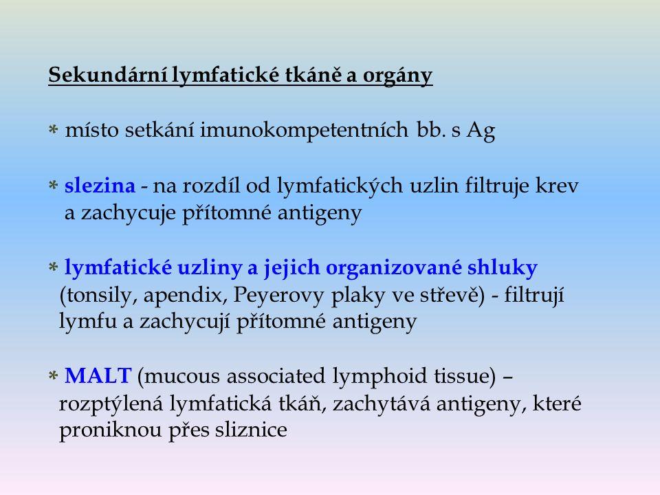 Sekundární lymfatické tkáně a orgány * místo setkání imunokompetentních bb.