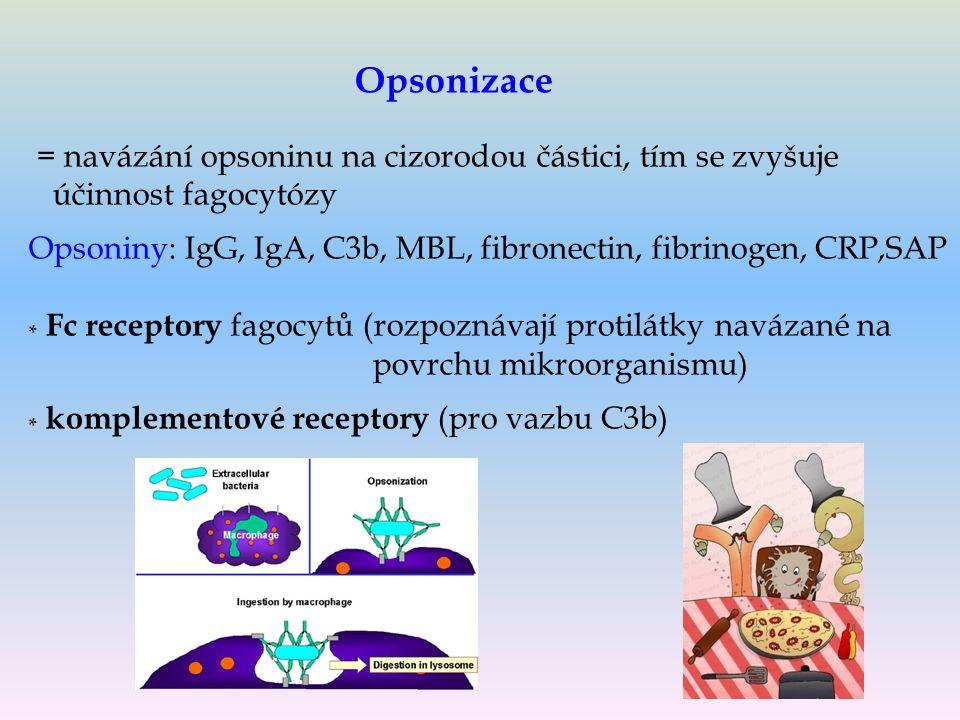 = navázání opsoninu na cizorodou částici, tím se zvyšuje účinnost fagocytózy Opsoniny: IgG, IgA, C3b, MBL, fibronectin, fibrinogen, CRP,SAP * Fc receptory fagocytů (rozpoznávají protilátky navázané na povrchu mikroorganismu) * komplementové receptory (pro vazbu C3b) Opsonizace