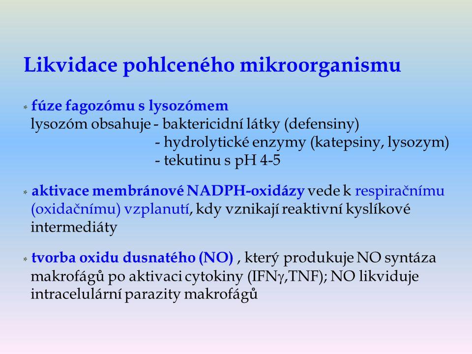 Likvidace pohlceného mikroorganismu * fúze fagozómu s lysozómem lysozóm obsahuje - baktericidní látky (defensiny) - hydrolytické enzymy (katepsiny, lysozym) - tekutinu s pH 4-5 * aktivace membránové NADPH-oxidázy vede k respiračnímu (oxidačnímu) vzplanutí, kdy vznikají reaktivní kyslíkové intermediáty * tvorba oxidu dusnatého (NO), který produkuje NO syntáza makrofágů po aktivaci cytokiny (IFN ,TNF); NO likviduje intracelulární parazity makrofágů