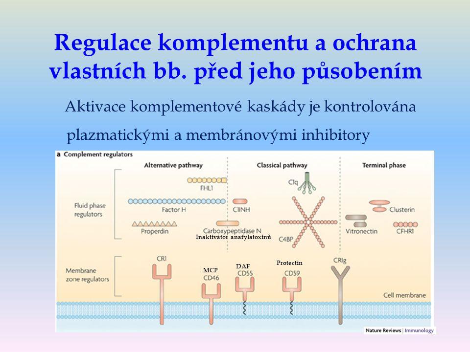 Regulace komplementu a ochrana vlastních bb.