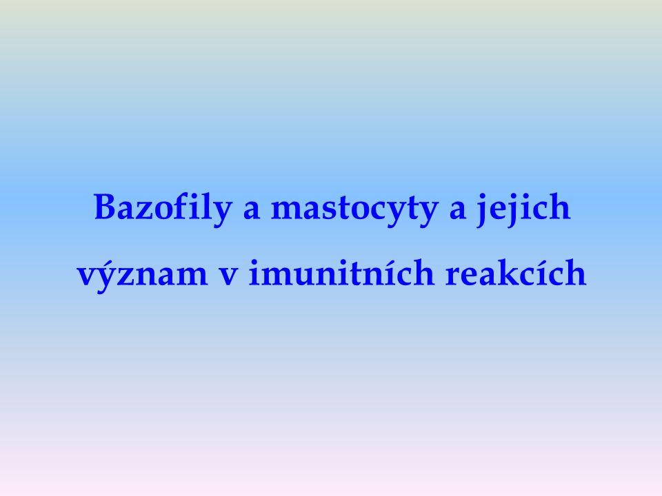 Bazofily a mastocyty a jejich význam v imunitních reakcích