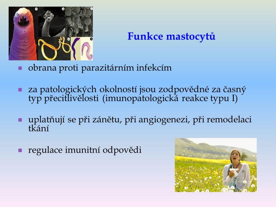 Funkce mastocytů obrana proti parazitárním infekcím za patologických okolností jsou zodpovědné za časný typ přecitlivělosti (imunopatologická reakce typu I) uplatňují se při zánětu, při angiogenezi, při remodelaci tkání regulace imunitní odpovědi