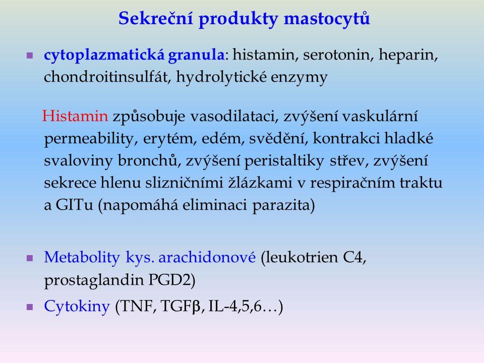 Sekreční produkty mastocytů cytoplazmatická granula : histamin, serotonin, heparin, chondroitinsulfát, hydrolytické enzymy Histamin způsobuje vasodilataci, zvýšení vaskulární permeability, erytém, edém, svědění, kontrakci hladké svaloviny bronchů, zvýšení peristaltiky střev, zvýšení sekrece hlenu slizničními žlázkami v respiračním traktu a GITu (napomáhá eliminaci parazita) Metabolity kys.