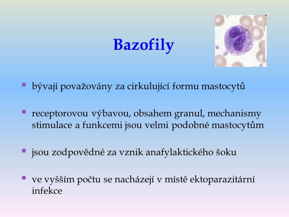 Bazofily   bývají považovány za cirkulující formu mastocytů   receptorovou výbavou, obsahem granul, mechanismy stimulace a funkcemi jsou velmi podobné mastocytům   jsou zodpovědné za vznik anafylaktického šoku   ve vyšším počtu se nacházejí v místě ektoparazitární infekce
