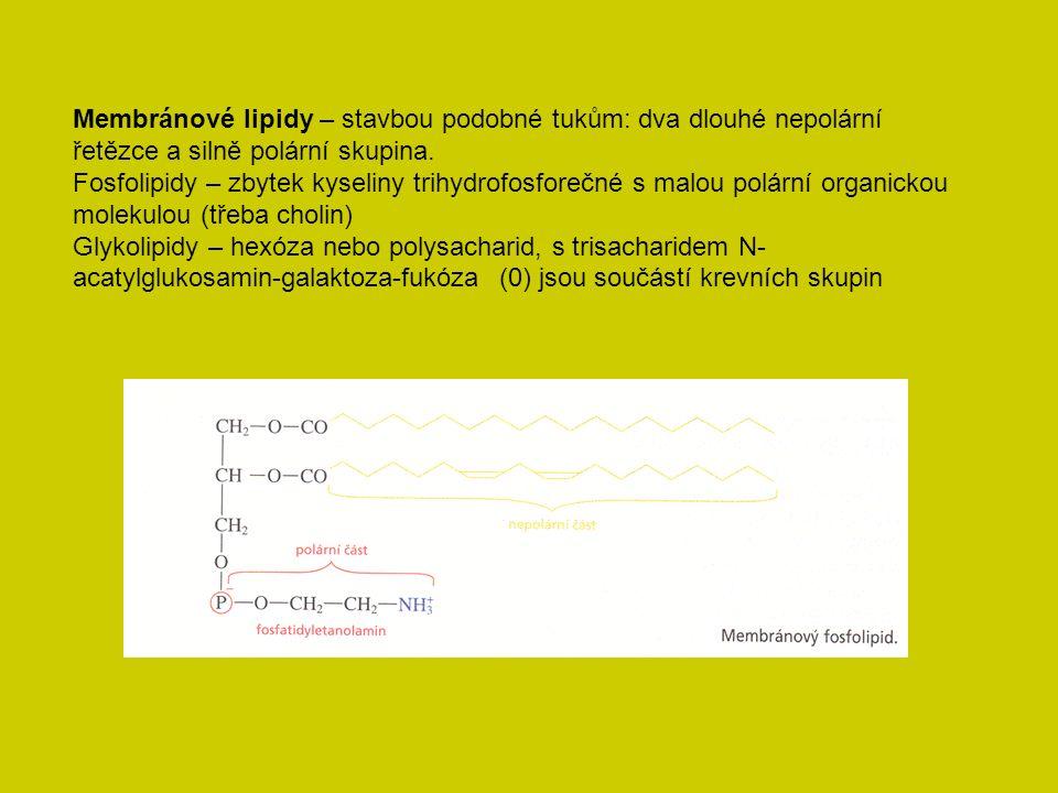 Membránové lipidy – stavbou podobné tukům: dva dlouhé nepolární řetězce a silně polární skupina.