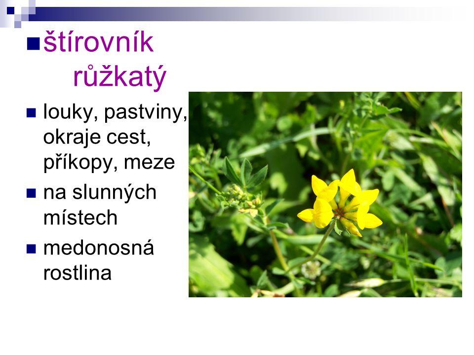 štírovník růžkatý louky, pastviny, okraje cest, příkopy, meze na slunných místech medonosná rostlina