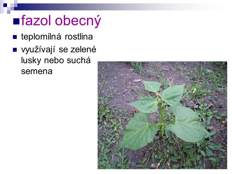 fazol obecný teplomilná rostlina využívají se zelené lusky nebo suchá semena