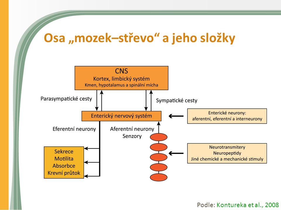 """Osa """"mozek–střevo a jeho složky Podle: Kontureka et al., 2008"""