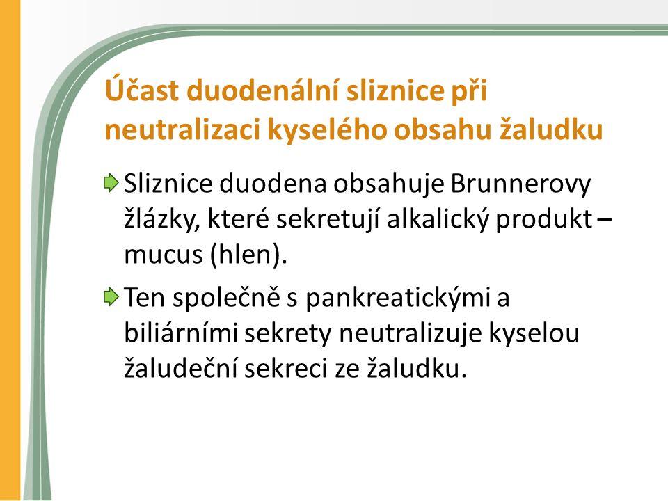 Účast duodenální sliznice při neutralizaci kyselého obsahu žaludku Sliznice duodena obsahuje Brunnerovy žlázky, které sekretují alkalický produkt – mucus (hlen).