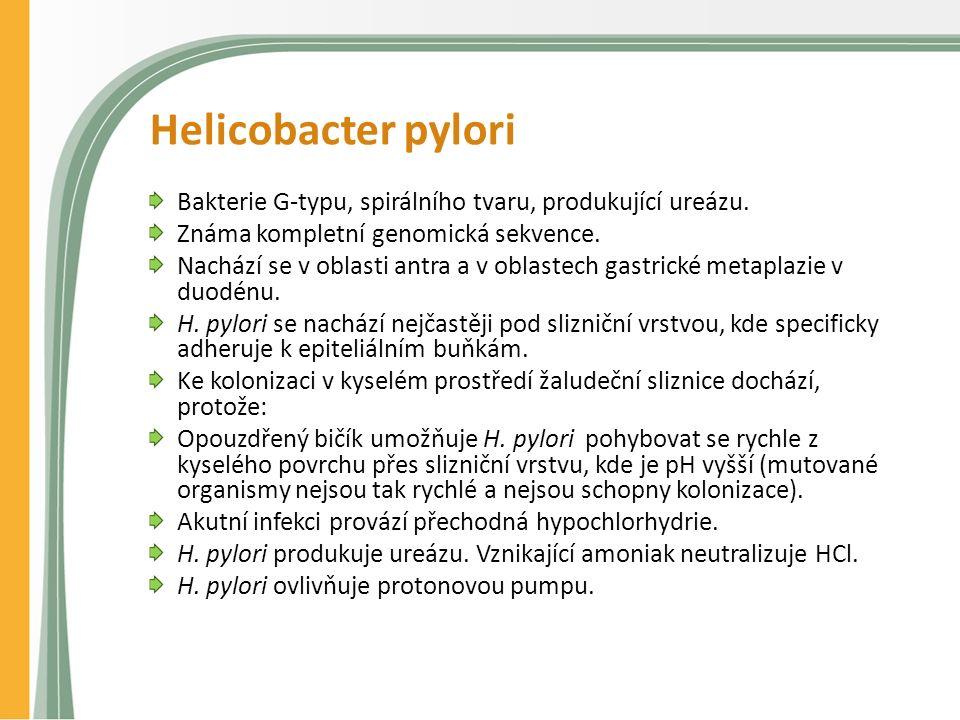 Helicobacter pylori Bakterie G-typu, spirálního tvaru, produkující ureázu.