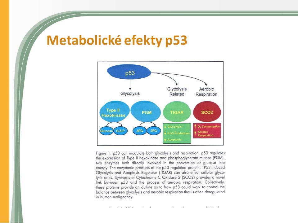 Metabolické efekty p53