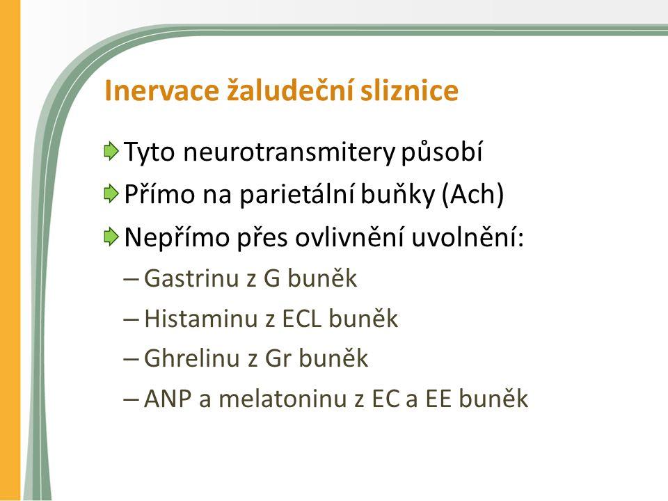 Inervace žaludeční sliznice Tyto neurotransmitery působí Přímo na parietální buňky (Ach) Nepřímo přes ovlivnění uvolnění: – Gastrinu z G buněk – Histaminu z ECL buněk – Ghrelinu z Gr buněk – ANP a melatoninu z EC a EE buněk