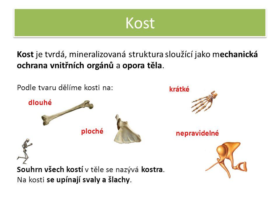 Kost Kost je tvrdá, mineralizovaná struktura sloužící jako mechanická ochrana vnitřních orgánů a opora těla.