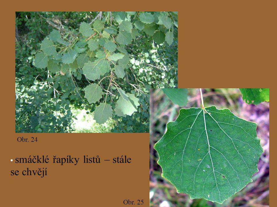 Obr. 24 Obr. 25 smáčklé řapíky listů – stále se chvějí